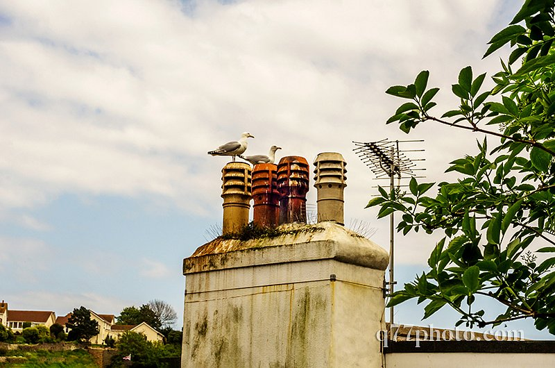 Birds on the chimney and roofs of buildings covered with green m