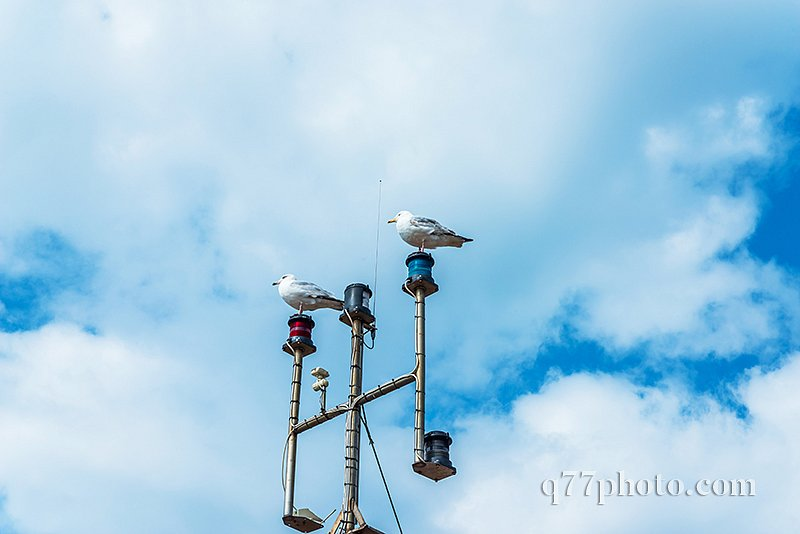 Two seagulls on the mast of the ship, in the coastal town, wild